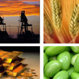 The Next Commodity Boom